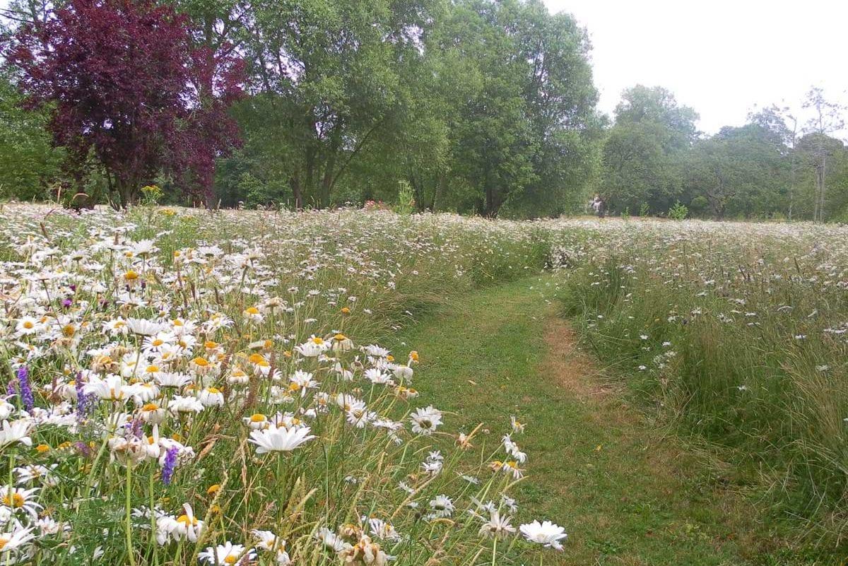 north-meadow2
