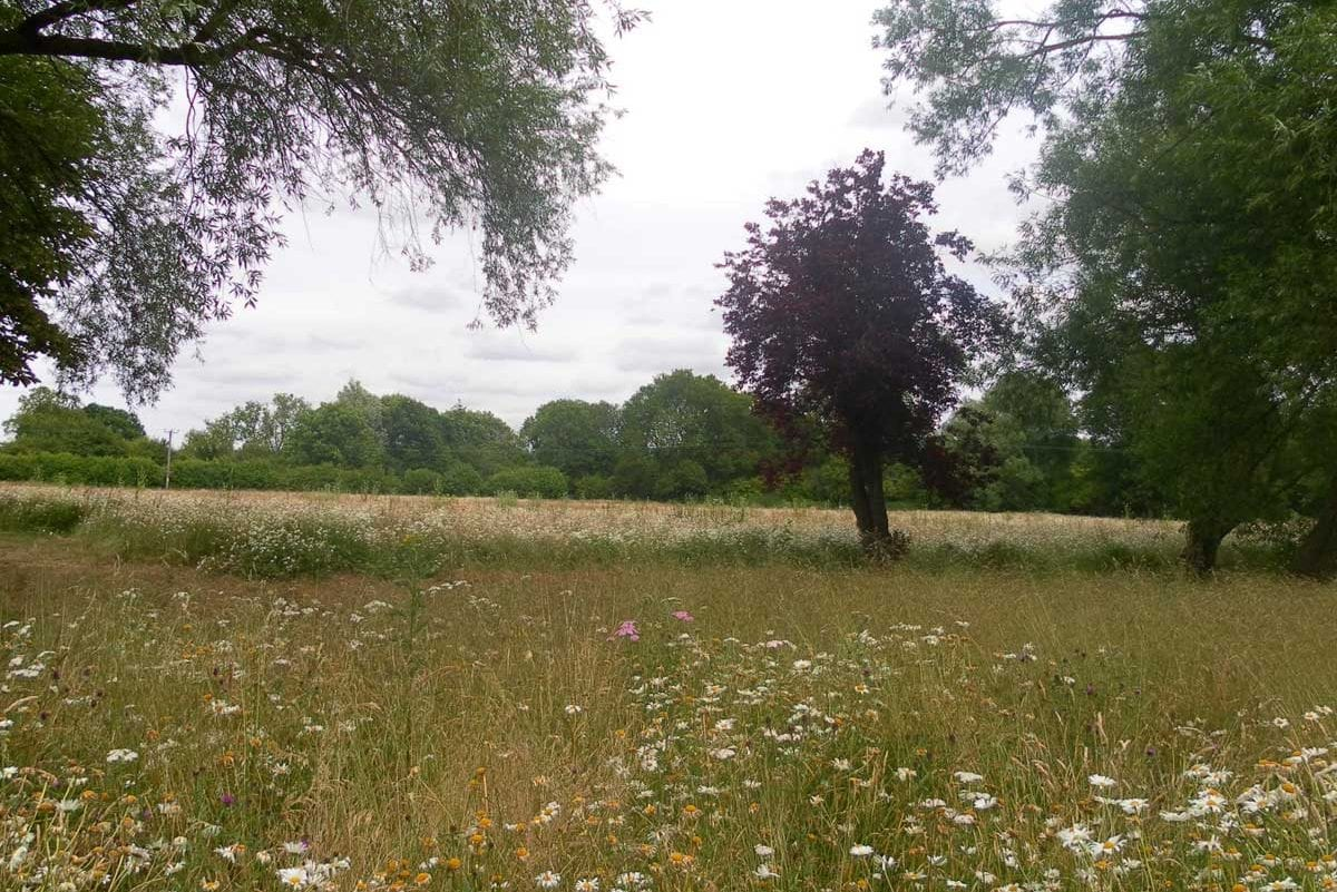 view-to-N-meadow