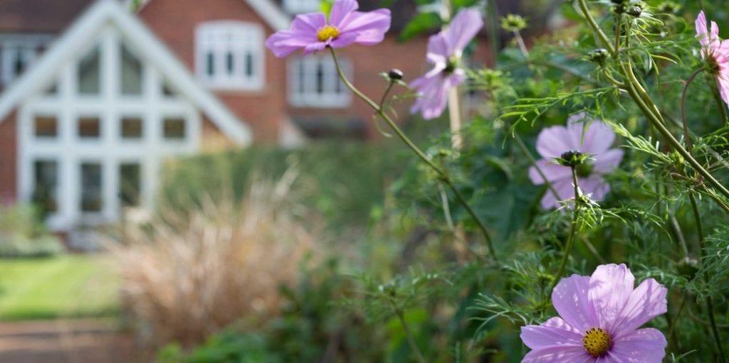 Robs garden