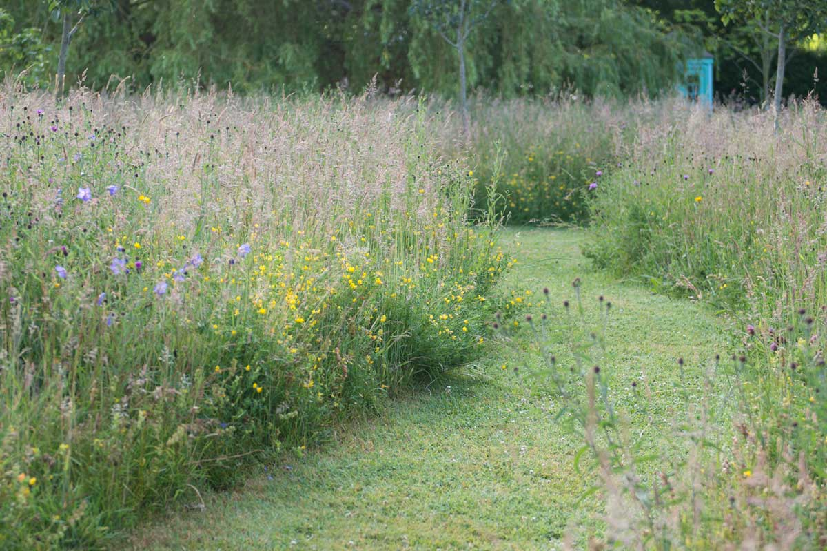 Wild flower meadow design the garden design company for Garden design company