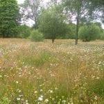 Restored 8 acres water meadow