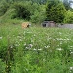 cotswolds-garden-design-wild-flower-meadow