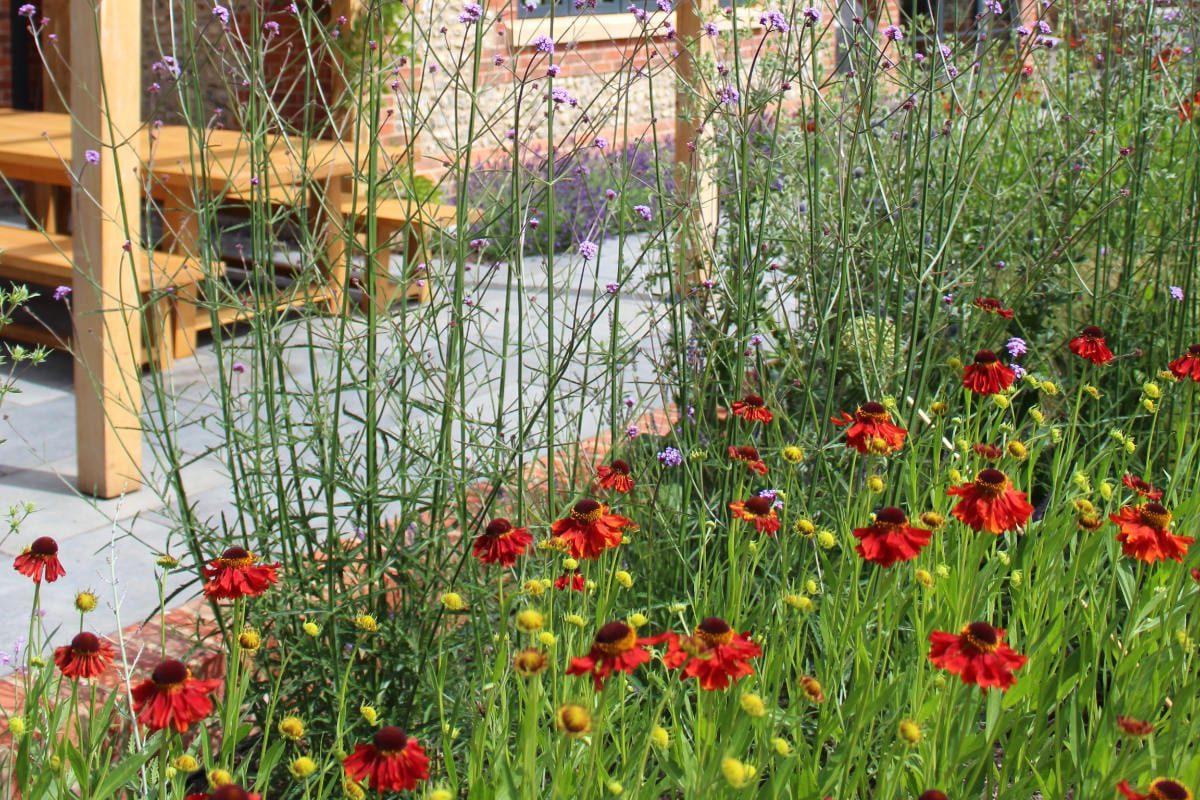 garden design heleniums