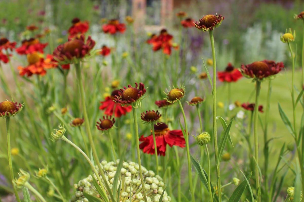 garden design flower mix