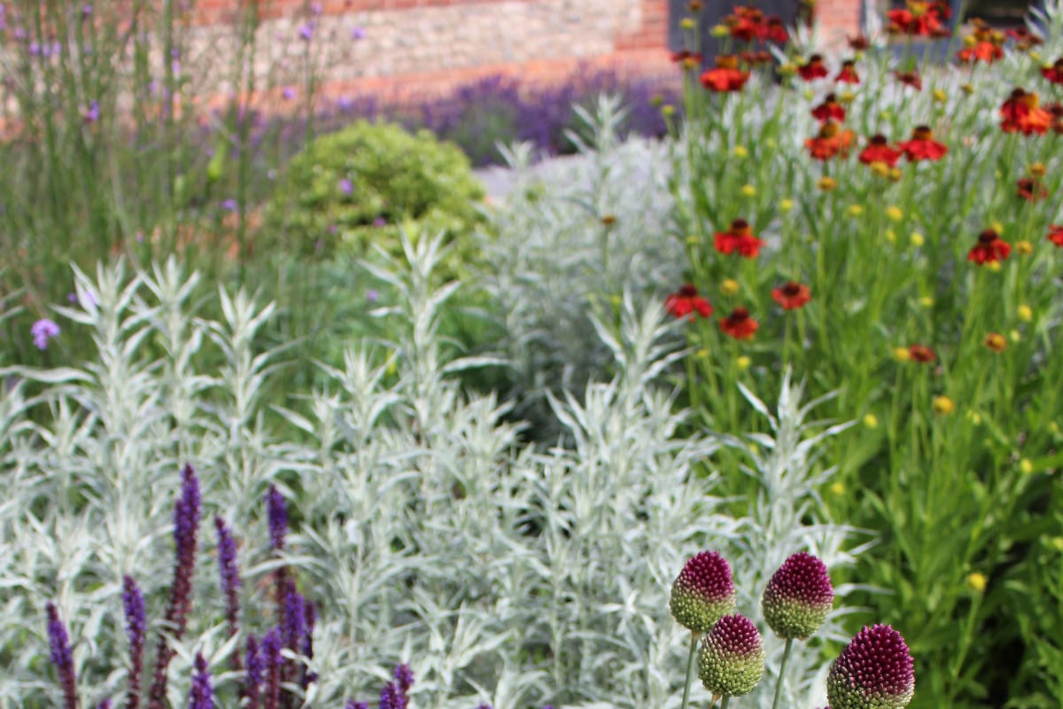 garden design reds and purples