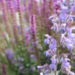 garden review flowers