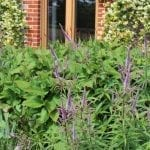 garden-review-foliage