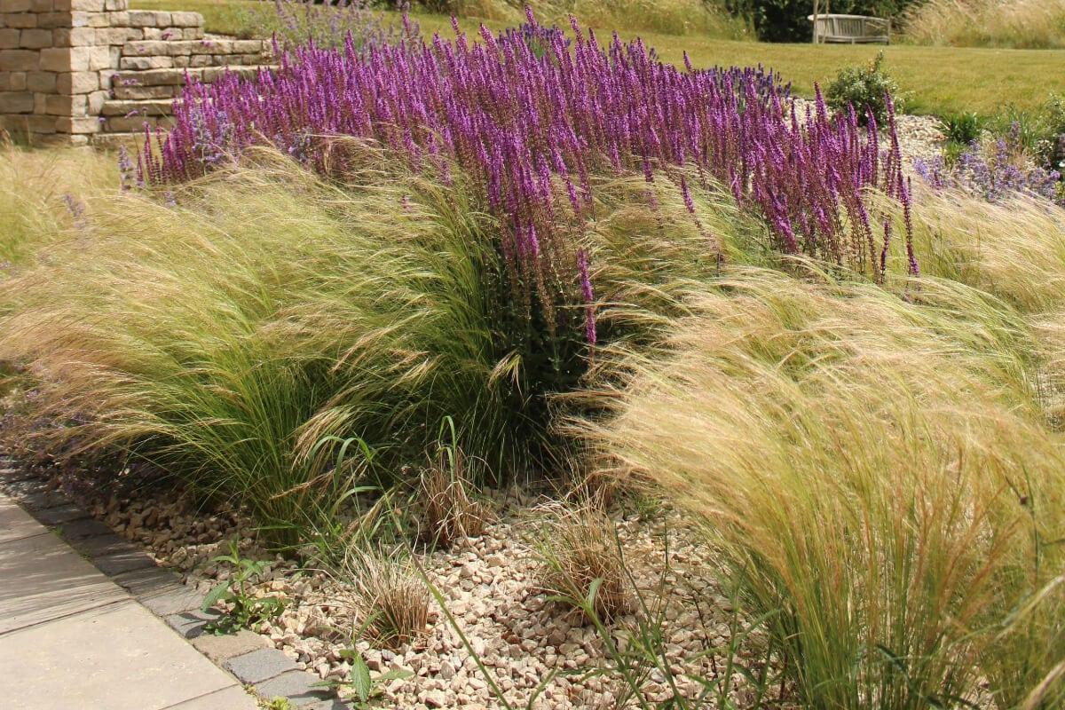 garden review ornamental grasses
