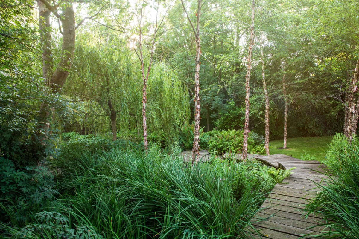 the boardwalk through the bog garden