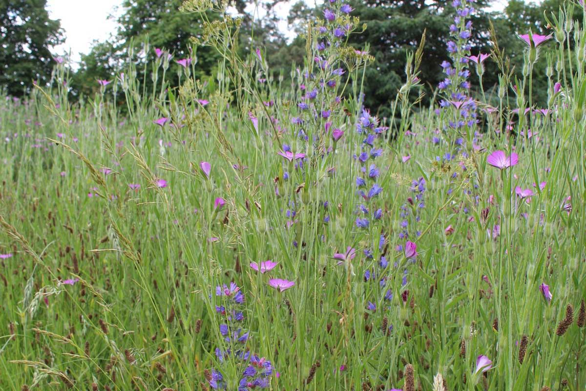 Berkshire Manor Meadow