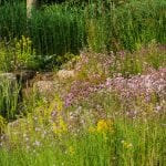 Scabiosa and lady's bedstraw