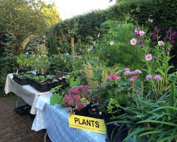 Plant stall at NGS Open Day