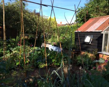 Thriving vegetable garden at Rivermead
